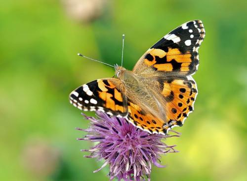 Webinar Biodiversiteit op en om het erf