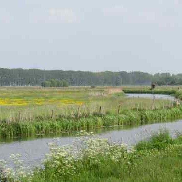 'Eerste Broedvogelinventarisatie van de nieuwe Binnenveldse Hooilanden', door Linus van der Plas