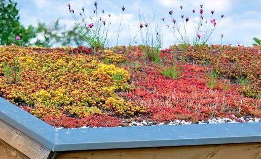 Plant4daagse: Kenniscafé Groene daken