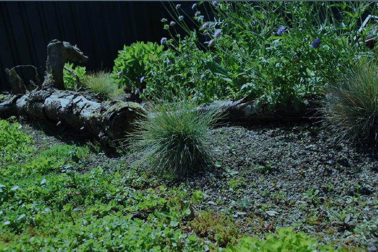 Groei en bloei lezing schaduwplanten