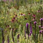 Groei en bloei lezing prairietuinen en kleurrijke borders