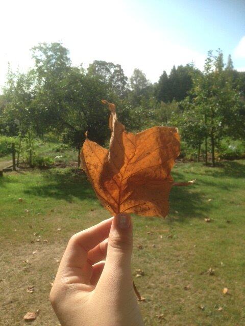 Open dag: Vier de Herfst
