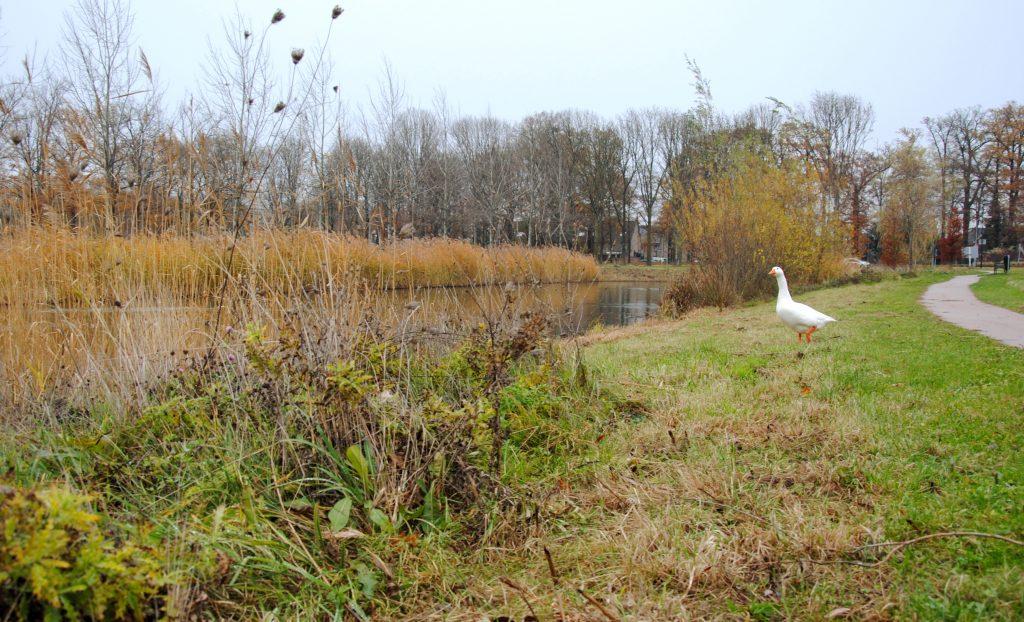Nijlantsingel Wageningen