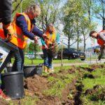 Vrijwilligers planten bloembollen